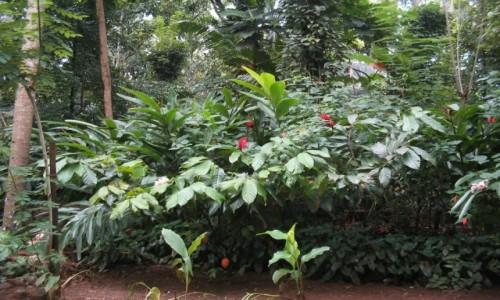 Zdjecie SRI LANKA / - /  Matale  / Ogród przypraw w Matale Sri lanka
