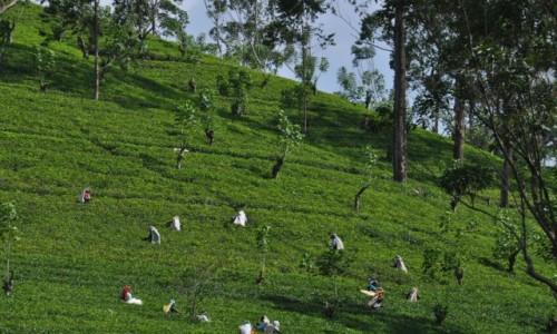 SRI LANKA / - / AZJA / Sri Lanka - Ceylon