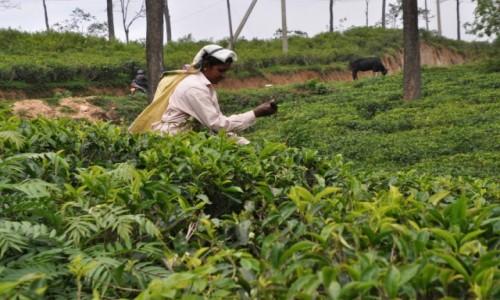 Zdjecie SRI LANKA / - / AZJA / Sri Lanka - Ceylon