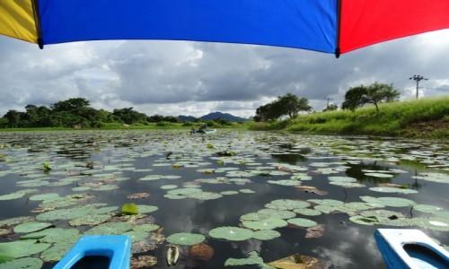 Zdjęcie SRI LANKA / prowincja Centranla / Sigiriya / Harmonia