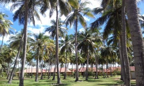 Zdjecie SRI LANKA / Thoduwawa / ośrodek wypoczynkowy / pocztówka ze Sri Lanki