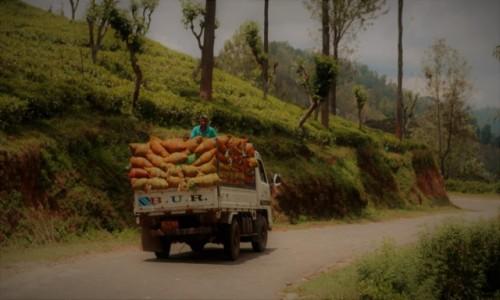 Zdjęcie SRI LANKA / Ella / Passara Rd / Transport liści herbaty