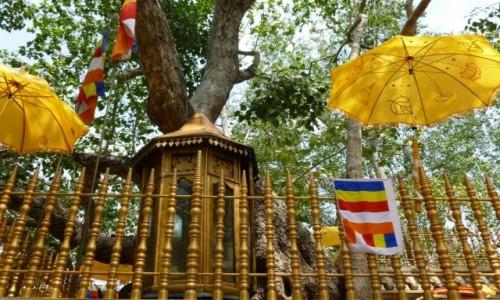 Zdjecie SRI LANKA / Anuradhapura  / Gałąź świętego drzewa Bo / Święto w  Anuradhapura