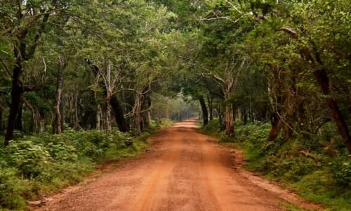 SRI LANKA / Prowincja północno-zachodnia / Wilpattu National Park / W tunelu