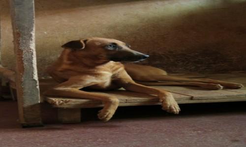 Zdjęcie SRI LANKA / Kandy / gdzies w drodze / w schronisku dla psow