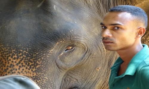 Zdjecie SRI LANKA / Central Province / Pinnawala / Karnak ze słoniem