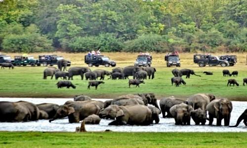 Zdjecie SRI LANKA / Habarana / Kaudulla National Park / Słonie u wodopoju