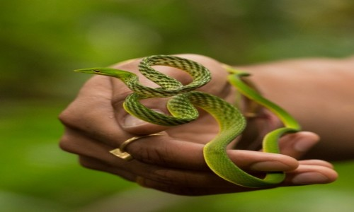 Zdjęcie SRI LANKA / Południowo zachodni / Las deszczowy Sinharaja / Potencjalny konsument