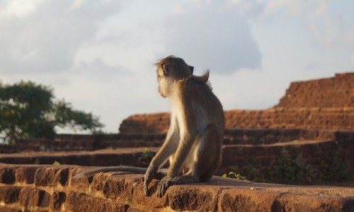 Zdjecie SRI LANKA / Sigiriya / Sigiriya / Zamyślenie
