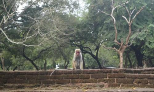 Zdjecie SRI LANKA / Polonnaruwa / Polonnaruwa / Ja tu rządzę