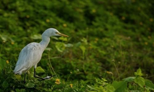 Zdjęcie SRI LANKA / Południowo zachodni / Fort Galle / Nieco przybrudzona ;-)