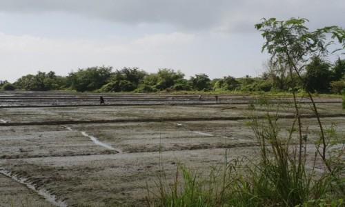 SRI LANKA / Centralna część kraju / Sri Lanka / Pola Ryżowe