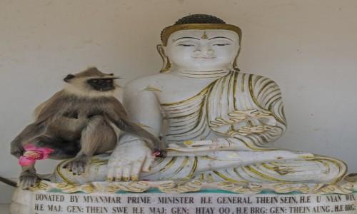 Zdjecie SRI LANKA / Północny zachód / Anuradhapura / Tyś moim Pasterzem ... ;-)