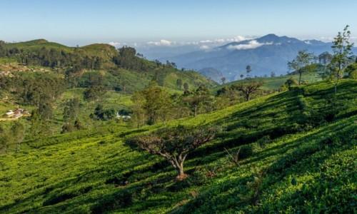 SRI LANKA / centralny / Lipton Seat / W krainie herbaty