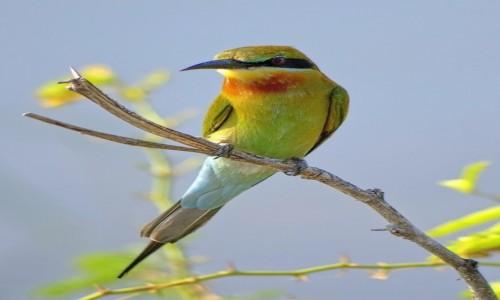 Zdjecie SRI LANKA / Sri Lanka / Bundala National Park / Ptaszek