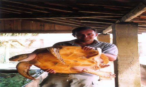 Zdjęcie SRI LANKA / brak / SL / Farma żółwi (rozpłodowa)