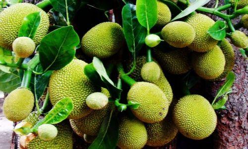 Zdjecie SRI LANKA / brak / brak / owoce:)