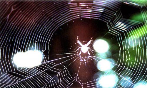 Zdjęcie SRI LANKA / brak / sl / Spider