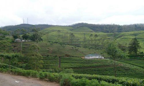 Zdjęcie SRI LANKA / Centrum / okolice Kandy / Pola herbaciane