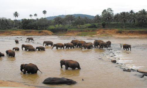 Zdjecie SRI LANKA / rezerwat słoni Sri Lanka / Sri Lanka / chwila w wodzie