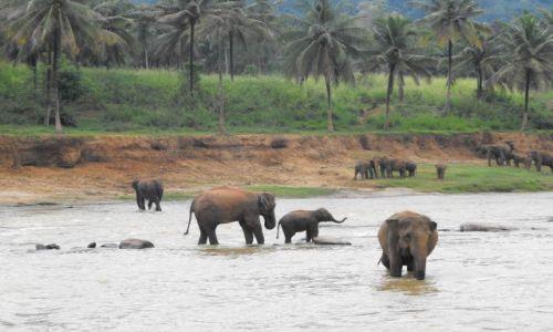 Zdjecie SRI LANKA / Pinnawela Sri Lanka / rezerwat słoni Pinnawela / ale widok