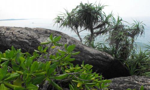 Zdjecie SRI LANKA / Hikkudawa / okolice plaży / fragment wybrzeża