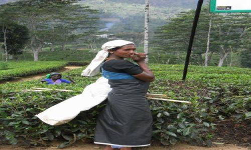 Zdjecie SRI LANKA / Uva / Okolice Nuwara Eliya / Mloda Tamilka