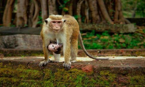 Zdjecie SRI LANKA / Polonnaruwa / ruiny pałacu królewskiego / Macierzyństwo