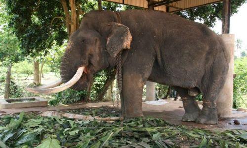 Zdjecie SRI LANKA / Pinnawella / Sierociniec sloni / Zabawka slonia