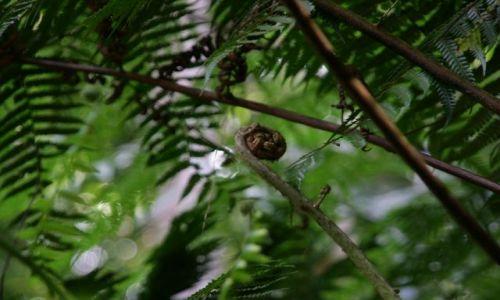 Zdjecie SRI LANKA / brak / Rezerwat lasow deszczowych / W krainie paproci