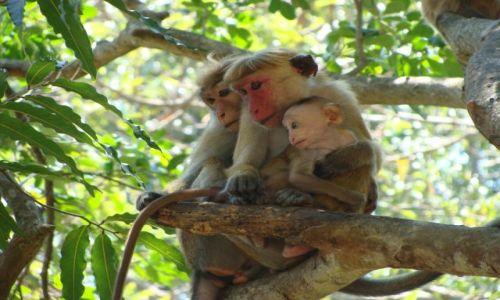 Zdjecie SRI LANKA / Yala Park / Yala Park / szcęśliwa rodzinka