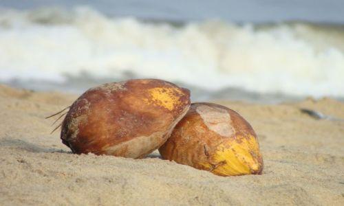 Zdjęcie SRI LANKA / Sri Lanka / Negombo / kokos na plaży