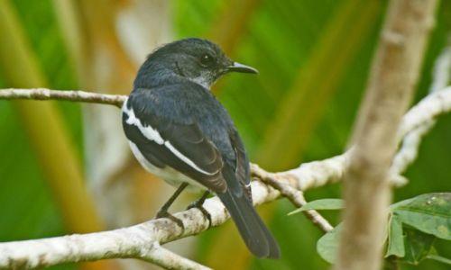 Zdjęcie SRI LANKA / Bentota / Bentota River / flora i fauna
