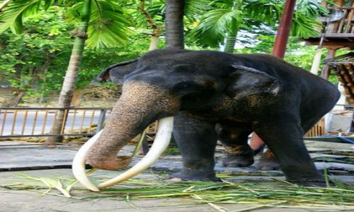 Zdjęcie SRI LANKA / Colombo / Colombo / Słoń