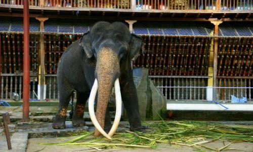 Zdjęcie SRI LANKA / Cejlon / Colombo / Proszę słonia