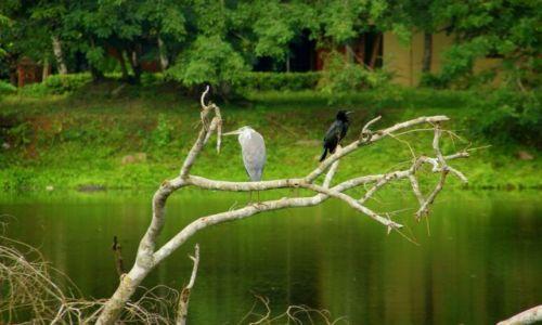 Zdjęcie SRI LANKA / Anuradhaoura / Anuradhaoura / Siedzą