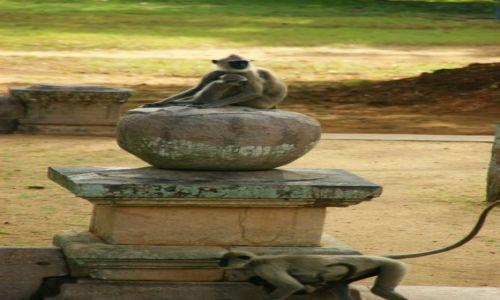 Zdjęcie SRI LANKA / Anuradhaoura / Anuradhaoura / Posąg
