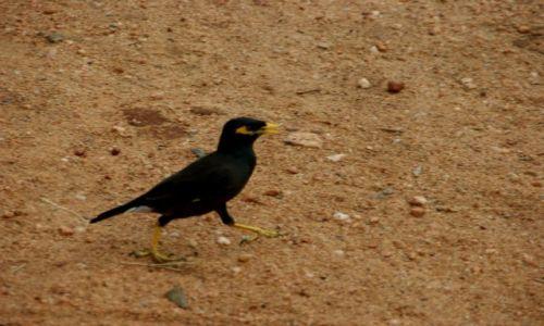 Zdjęcie SRI LANKA / Anuradapura / Anuradapura / Ptok