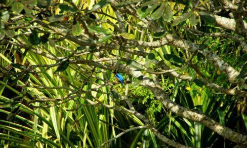 Zdjęcie SRI LANKA / Anurapapura / Anurapapura / Ptok