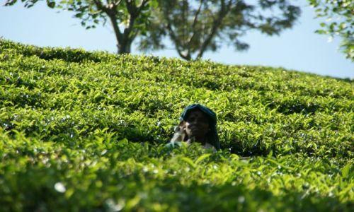 Zdjęcie SRI LANKA / Cejlon / Cejlon / Zbiory