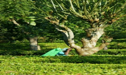 Zdjęcie SRI LANKA / Cejlon / Cejlon / Pole