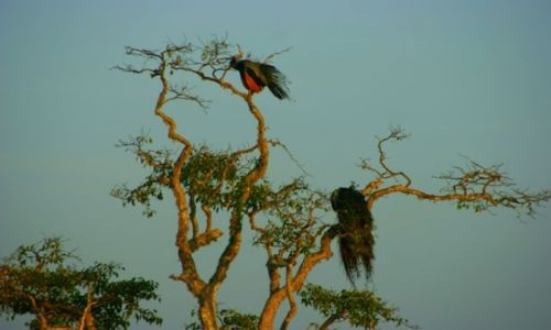 Zdjęcie SRI LANKA / Jella / Jella / Ptaki