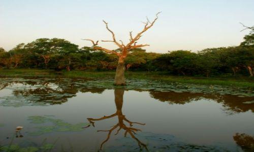 Zdjęcie SRI LANKA / Jella / Jella / Drzewo
