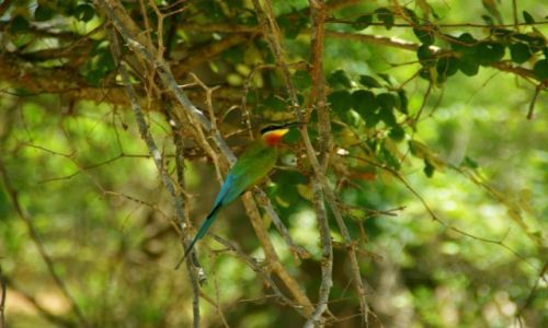 Zdjęcie SRI LANKA / Yella / Yella / Ptok