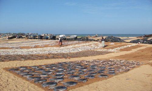 Zdjęcie SRI LANKA / Negombo / Negombo / ... suszarnia ...