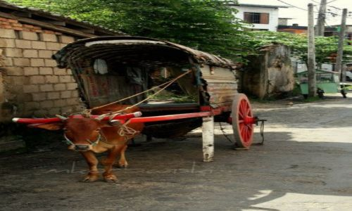 Zdjęcie SRI LANKA / - / Galle / ...