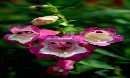 Zdjecie SRI LANKA / - / Botanic Garden / ...