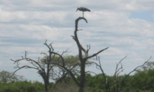 Zdjęcie SUAZI / Royal National Park - Suazi / Royal National Park - Suazi / Park  HLANE  Suazi