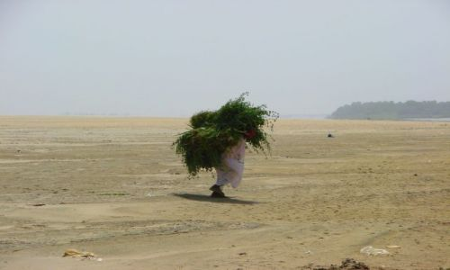 Zdjęcie SUDAN / Dongala / Dongala / Urobek