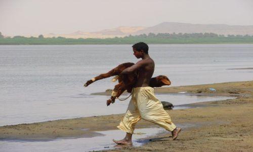 Zdjęcie SUDAN / Dongala / Dongala / Niesie barana